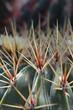 canvas print picture - Kaktus Makro