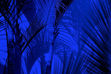Group Of Close Up Decorative Palm Trees And Their Shadows On Building Wall Under Blue Lights At Night