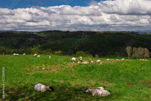 Photo sur Aluminium Kaki paysage de Lozère