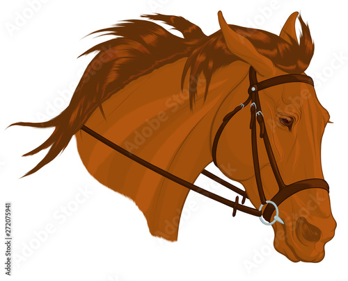 Slika na platnu Colored portrait of a sorrel stallion in English bridle with a snaffle bit