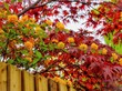 Leinwandbild Motiv autumn leaves on tree