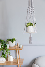 Stylish And Minimalistic Boho Interior Of Living Room With Wooden Shelf, Gray Sofa, Design And Elegant Accessories, Hand Made Macrame Shelf Planter Hanger. Botany And Home Decor With A Lot Of Plants.