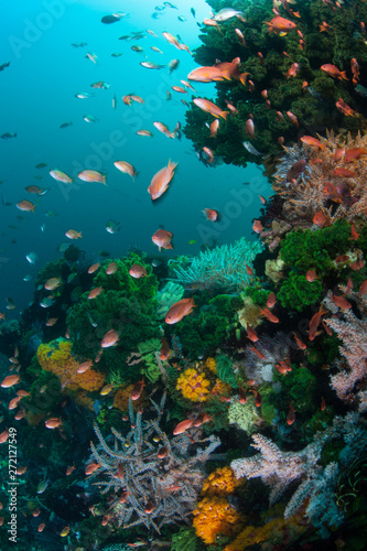 Colorful reef fish swarm over a vibrant coral reef in Komodo National Park, Indonesia Canvas Print