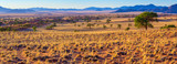 Fototapeta Sawanna - malerische Landschaft am Rande der Namib, Panorama, NamibRand-Naturreservat, Namibia