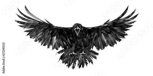 painted portrait of a raven on a white background in front with a wingspan Canvas Print
