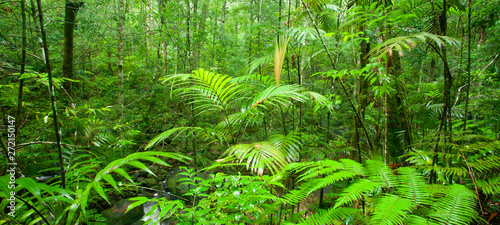 Foto auf AluDibond Pistazie Pure tropical forest on rainy morning.
