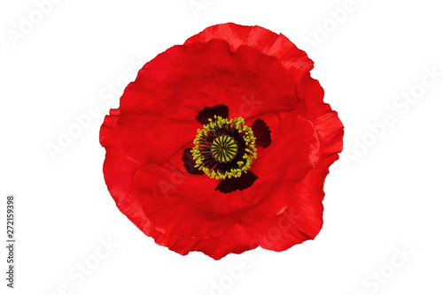 Bright red poppy flower isolated on white, top view Canvas-taulu