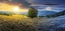 Day And Night Time Change Concept Above The Beech Tree On The Meadow In Mountains. Landscape With Sun And Moon. Wonderful Summer Scenery Of Carpathian Countryside. Mountain Ridge In The Distance.