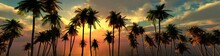 Palm Trees At Sunset, Panorama Of The Beach With Palm Trees At Sunrise