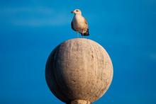Seagull Portrait On A Globe
