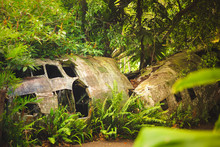 Crashed Plane In The Rainforest