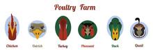 Flat Icon Poultry Farm