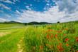 Sommerblumen in der Ortenau nahe Diersburg