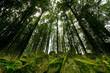 wunderschöner Schwarzwald nahe Sasbachwalden im Sommer