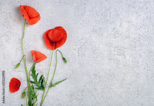 In de dag Poppy Wild red poppy flowers on light concrete background. Top view with copy space.