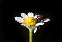 Insect On Flower Black Background