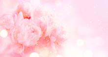 Beautiful Pink Peony Bouquet A...