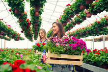 Two Beautiful Woman Florist Working With Flowers In Greenhouse Garden. Taking Care Of Plants For Sale.