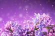 canvas print picture - Lilac flowers bunch violet art design background. Beautiful violet Lilac flowers closeup. Watercolor nature floral backdrop