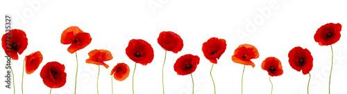 Garden Poster Poppy Coquelicots sur fond blanc pour bannière