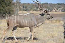 BOTSUANA (safari Fotografico)