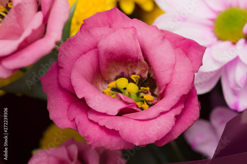 Photo sur Toile Rose Bouquet of beautiful garden flowers