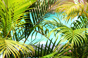 Obraz na Szkle Drzewa Palm leaves