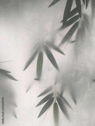 Fototapeta z bambusem we mgle