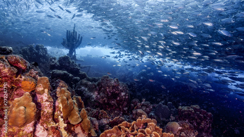 Photo  Bait ball in coral reef of Caribbean Sea around Curacao at dive site Playa Grand