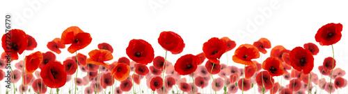 Garden Poster Poppy plein de coquelicots sur fond blanc