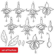 Set With Outline Fuchsia Ornate Flower, Bud And Leaf In Black Isolated On White Background.