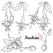 Set With Outline Fuchsia Ornate Flower Bunch, Bud And Leaf In Black Isolated On White Background.