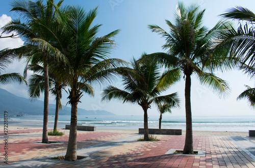 DA NANG SCENERY - beach with coconut tree