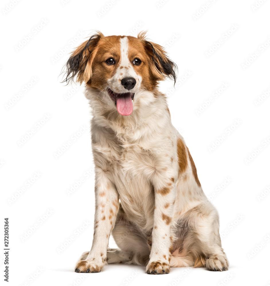 Panting Mixed-breed dog sitting against white background