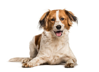 FototapetaMixed-breed dog looking at camera against white background