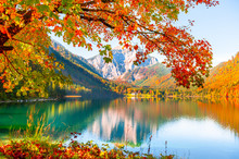 Yellow Autumn Trees On The Shore Of Lake In Alps, Austria. Vorderer Langbathsee Lake. Beautiful Autumn Landscape