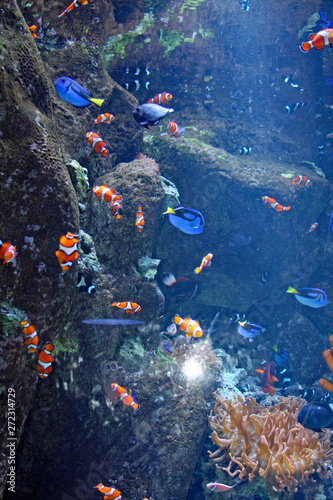Poster Coral reefs Tropical Fish