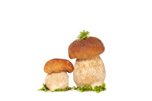 Two Forest King Boletus Mushrooms Isolated On White