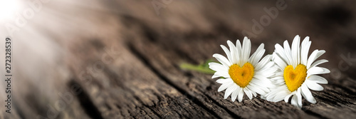 Stampa su Tela  Banner Of Two Daisies With Heart Shaped Centers On Rustic Wood