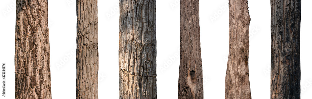 Fototapety, obrazy: isolated tree trunk Collection on White background.