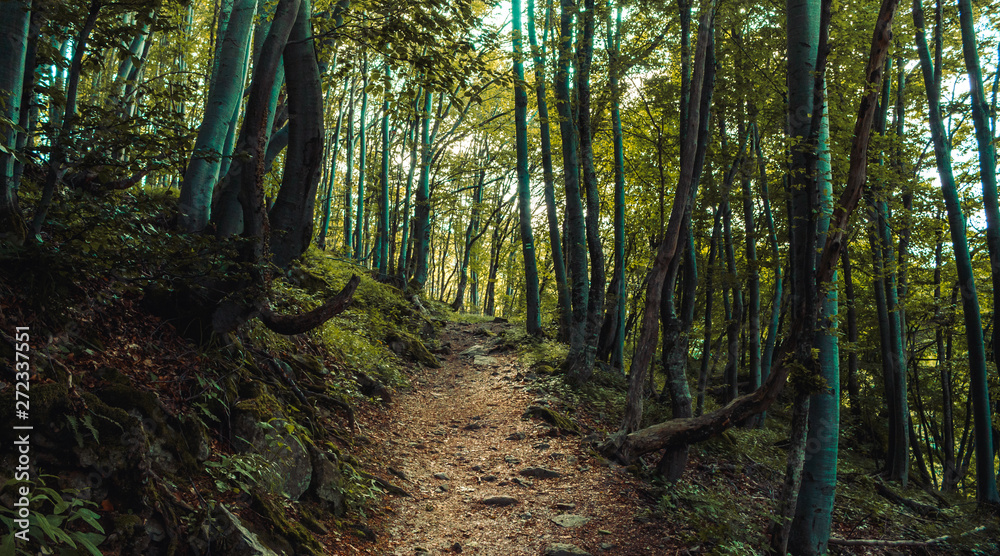 Fototapety, obrazy: forest path landscape, beautiful nature in Bulgarian mountain