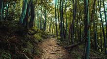 Forest Path Landscape, Beautif...