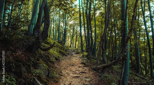 Papiers peints Route dans la forêt forest path landscape, beautiful nature in Bulgarian mountain