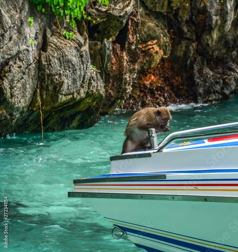 A monkey on the speedboat Canvas Print