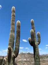 Cactus And Blue Sky