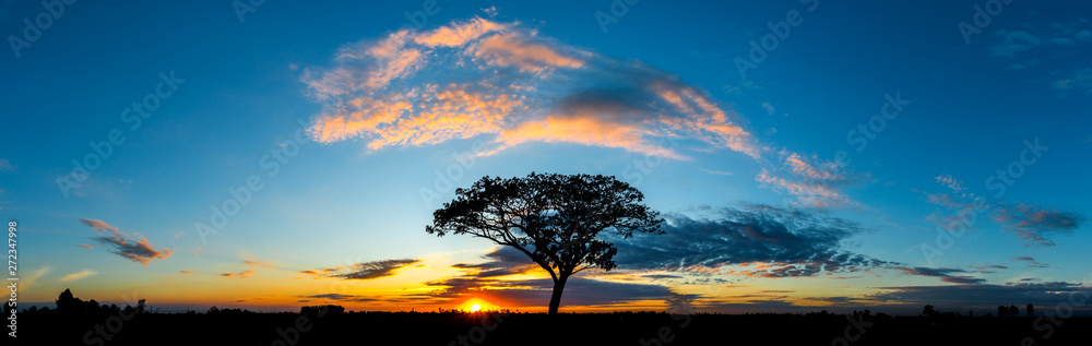 Fototapety, obrazy: Panorama silhouette tree in africa with sunset.Tree silhouetted against a setting sun.