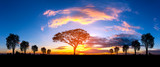 Fototapeta Sawanna - Panorama silhouette tree in africa with sunset.Tree silhouetted against a setting sun.