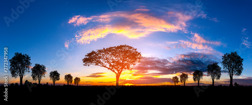 La pose en embrasure Afrique Panorama silhouette tree in africa with sunset.Tree silhouetted against a setting sun.