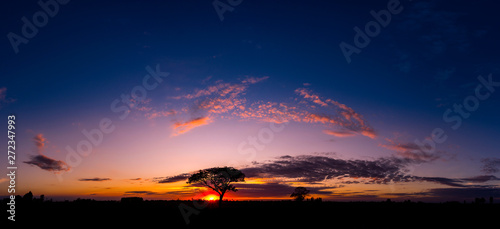 Keuken foto achterwand Bomen Panorama silhouette tree in africa with sunset.Tree silhouetted against a setting sun.