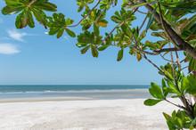 Green Leaf Covered On The Beach In Tropical Sea